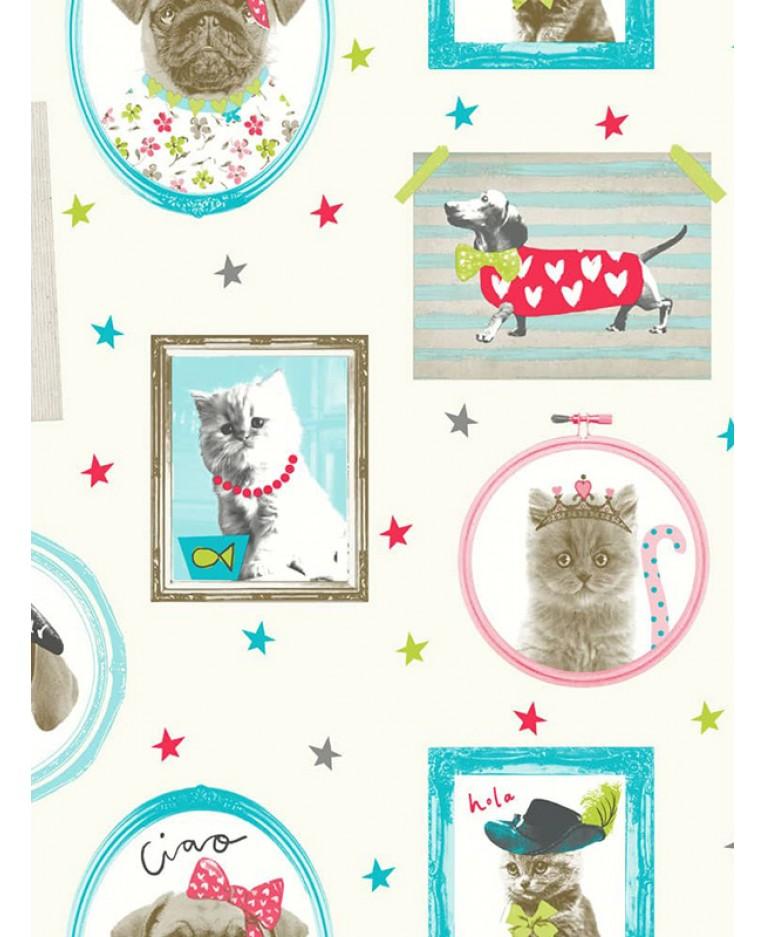 Tapeta kočky a psi v rámečcích 10m